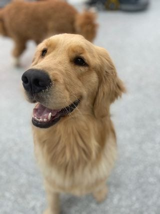 Bay Rivers Dog Boarding Prices