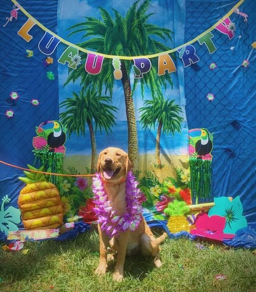 Bay Rivers Boarding & Daycare Luau Party
